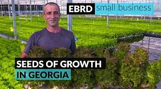 Bringing fresh vegetables and consumers closer together in Georgia